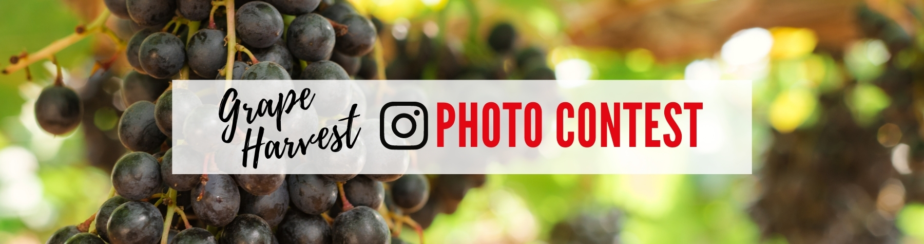 Harvest photo competition
